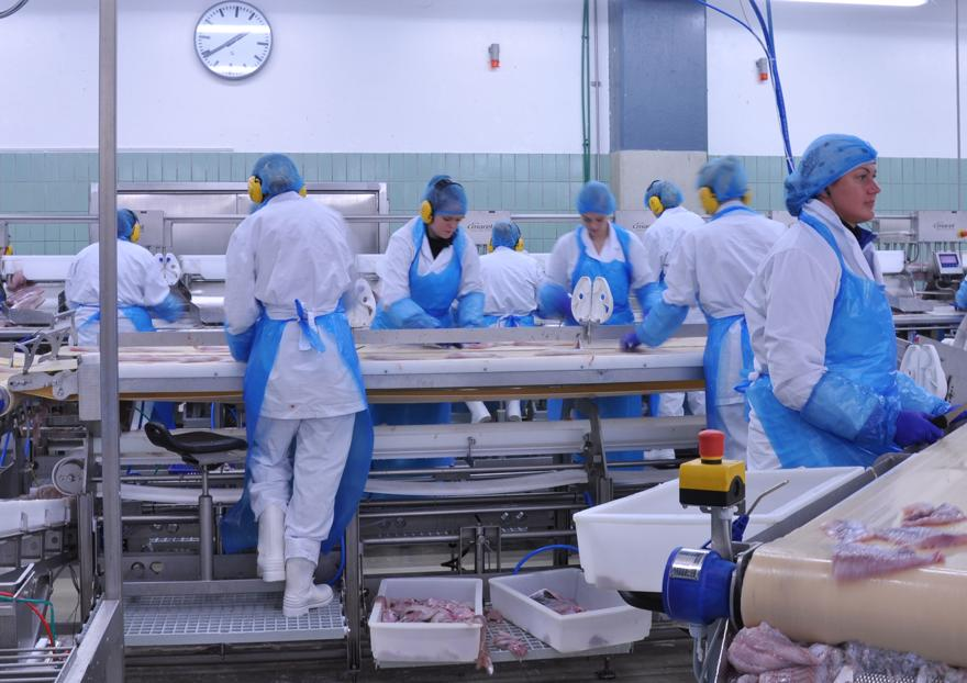 people working in a food manufacturing facility wearing hairnets and white scrubs