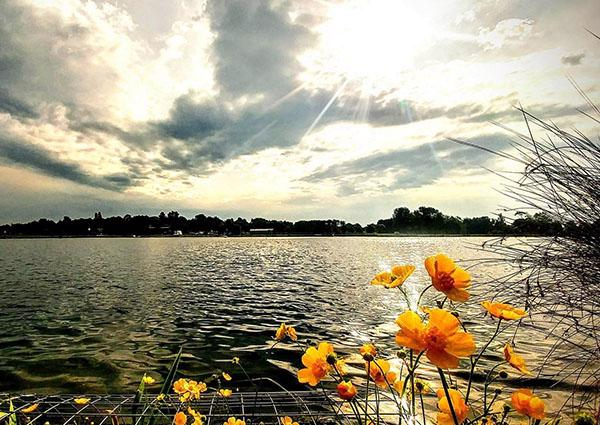 A view over the lake at Lakeside Campus. The sun is setting and some orange flowers are  in close up in the foreground of the picture