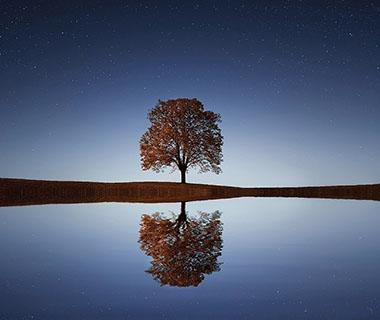 A tree is reflected in a lake