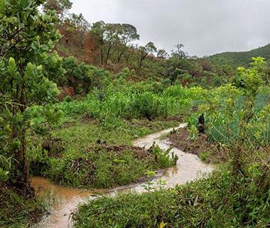 An image of a Wetlands area. The ground is waterlogged and the trees and foliage are lush and green.